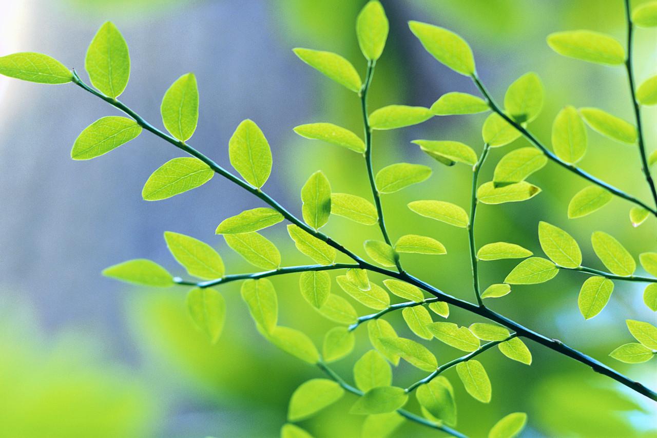 Arbor Alliance Tree Group
